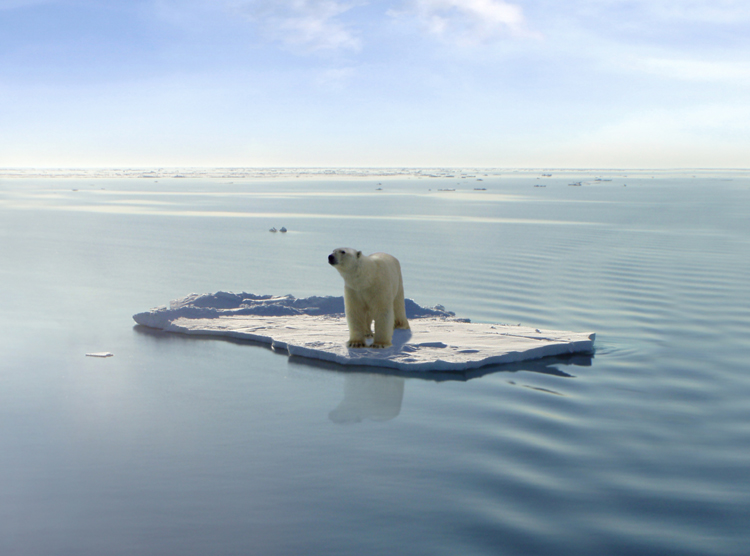 polar-bears-global-warming